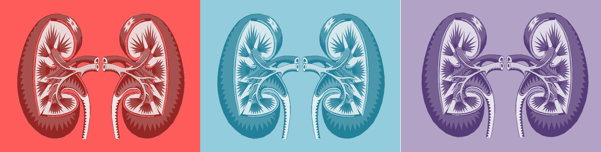 kidney mosaic composition